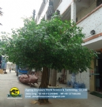 High Quality Artificial banyan tree DWT009